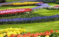 Thơ Đố Về Hoa